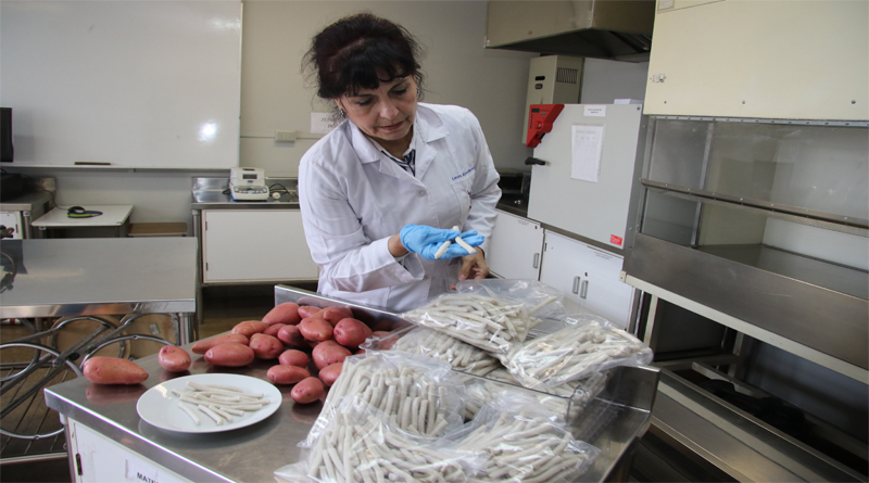 Innovadora botana de arroz y papa absorbe hasta 3 veces menos aceite