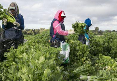 Empresarios de Houston ven oportunidades en agroindustria queretana