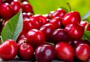 Anthocyanins may inhibit the growth of colon cancer