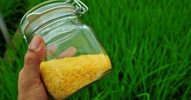 Arroz dorado, polémico pero necesario, es permitido en más países