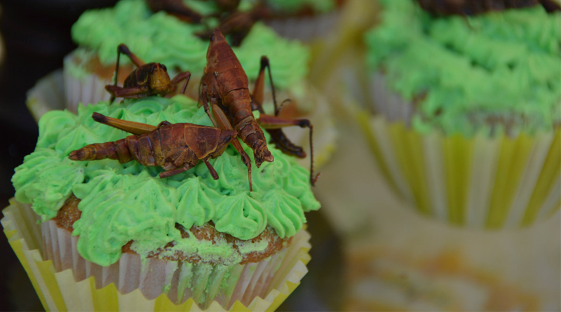 La industria de alimentos basados en insectos da un nuevo paso en la Unión Europea: autorizó su consumo