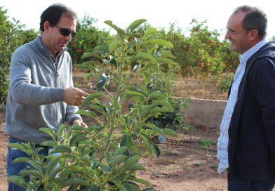 Misión comercial europea visitó México para negociar importaciones alimentarias