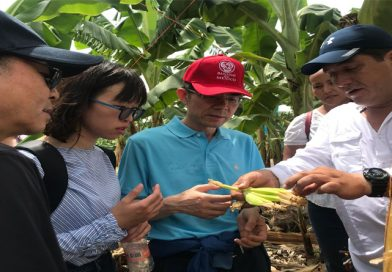 Avanza México en protocolos para exportar plátano a China