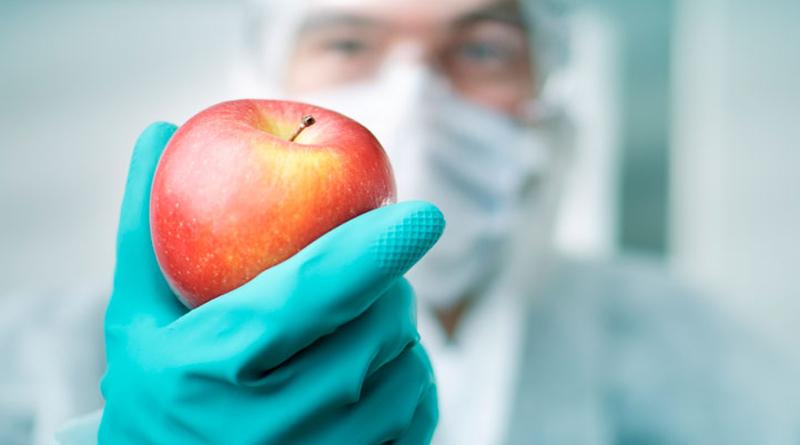 Los cultivos transgénicos aseguran la disponibilidad de más y mejores alimentos